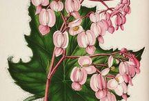 Botanical Prints / by Jan Fox