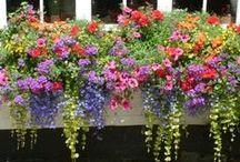 Container Flower Gardening  / by Jan Fox