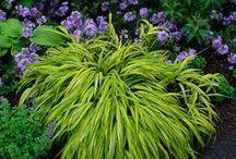 Gardening In the Shade / by Jan Fox