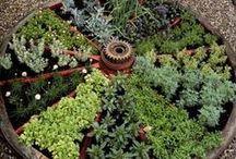 Herb Gardening / by Jan Fox