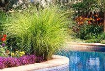 Ornamental Grasses in the Garden / by Jan Fox