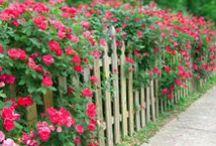 Roses in the Garden / by Jan Fox