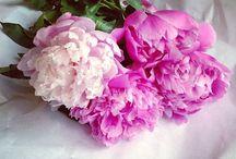 Pretty In Pink / by Rhonda