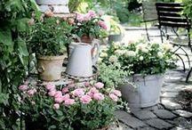 Garden Ideas for Backyard / Garden ideas for my backyard / by Art, Love and Joy