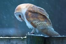 Gods Beautiful Birds / by Beth Wilson