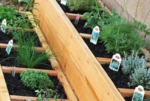 Backyard Veggie Gardens / What is more rewarding than growing your own healthy delicious food? Share your tips, knowledge and inspiration with us! If you like this board don't forget to have a look at the rest of my boards at http://pinterest.com/tranquilwild/.  / by Tranquil Wilderness