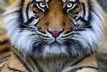 Animal beauty / by Gary C.