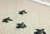 Turtles / by Gena Nowicki-Mcvitty