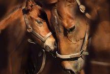 Horses / by Maya Sofia Preston