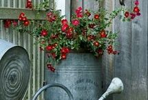 I love container gardening / by Shari Thomas