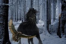 Horses / by Brenda Saball