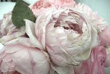 La Vie En Rose / I love pink antique roses. They are my favorite. / by Patricia Main