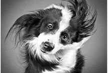 Smile!! / Funny and cute pet stuff / by Ambassador Animal Hospital