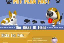 Fleas and Ticks / by Ambassador Animal Hospital