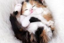 Just for Cats / All kinds of interesting facts about cats / by Ambassador Animal Hospital
