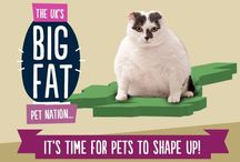 Weight issues / Obesity and weight loss in pets / by Ambassador Animal Hospital