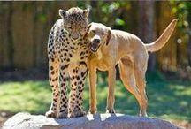 animals / by alex holman