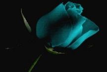 Rose / by Lisa Maneskjold Lower-Blair