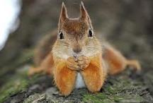 A bit Squirrelly  / by Shelley Sheehe