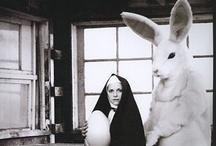 Bad Bunny / by Shelley Sheehe