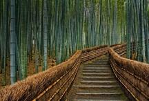 Bamboo Who? / by Shelley Sheehe