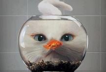 CAT / by Shelley Sheehe