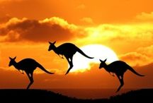 AMAZING AUSTRALIA / by Dror Mosesson