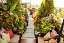 Garden & Landscaping Ideas & How To's / More people are  seeing the need to grow their own food because we are constantly hearing about unsafe food in our stores. My family is just beginning to educate ourselves about the best ideas.  / by Kaye Lyons