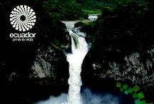 Amazon / Amazonía / The most biodiverse place around the world. El lugar más biodiverso del planeta / by ✈Visit Ecuador and its Galapagos Islands