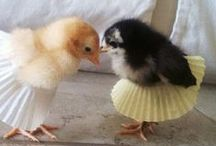 Hot Chicks / by Jessica Boling
