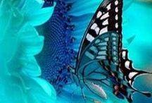 Wings / by Cheryl