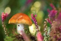 Fungi / by Cheryl
