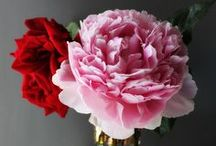Flowers / by Vanessa Sternhagen