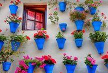 Floreiras / by Inês Viegas