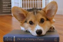 Corgis!! / my fave dog breed!! / by Aly Pink
