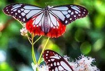 Butterflies & Moths / by Debbie Chandler