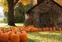 Seasons: Autumn / by Erica G.
