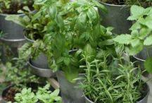 Herbs / by Luisella Proserpio