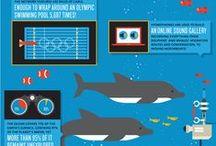 Infographics / by Jhilik Dasgupta