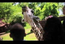 Videos / by Saint Louis Zoo