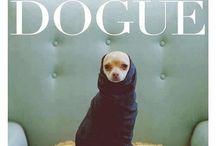 doggie stuff / by Alexandra Carl