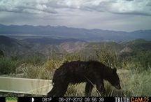Critter Cam  / by Bureau of Land Management