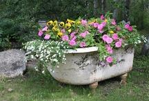 gardening / by Robin Hurley