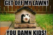 Grumpy Cat & Funny Kittys / by Janet Johnson