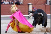 Toros y toreros / by Raya