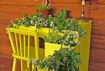 plants & garden / by Westa Buckelew