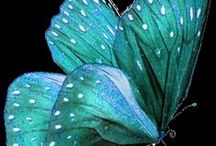 ♍*BRILLIANT BUTTERFLIES* / Beautiful and Exquisite Butterflies.  Please,  just 10 at a time.  Thanks ❤ / by Roberta Gunnell