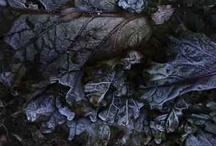 Natural World / by Shawnee Richey