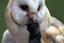 Wildlife / http://www.fws.gov/endangered/species/us-species.html / by Leslie Kelly