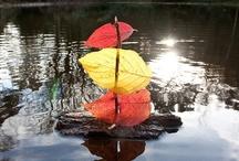 Automne / Autumn / by Education Joyeuse